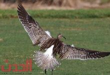 Photo of طائر نادر للغاية يُرصد لأول مرة في أبوظبي.